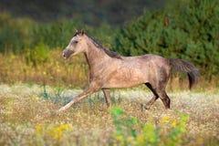 Лошадь, который побежали на поле стоковые изображения