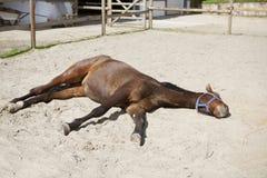 Лошадь лежит в солнце стоковое фото