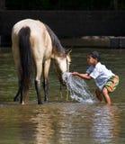 лошадь мальчика Стоковое Фото