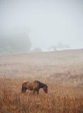 Лошадь моря стоковое фото rf