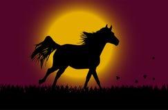 лошадь над восходом солнца Стоковые Изображения