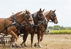 лошадь нарисованная демонстрациями Стоковое Фото