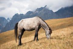 Лошадь на выгоне в горах Svaneti, Georgia Стоковые Изображения