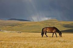 Лошадь на заходе солнца, Altai Стоковые Фото