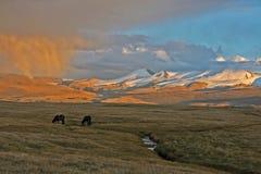 Лошадь на заходе солнца, Altai Стоковые Изображения