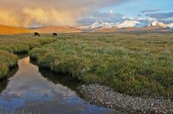 Лошадь на заходе солнца, Altai Стоковая Фотография