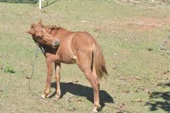 Лошадь на земле на парк Стоковая Фотография RF