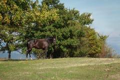 Лошадь на луге Стоковые Изображения