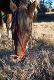 Лошадь на портрете захода солнца стоковые фотографии rf