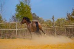 Лошадь на природе Портрет лошади, коричневая лошадь Стоковая Фотография