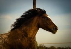 Лошадь на природе Портрет лошади, коричневая лошадь Стоковое фото RF