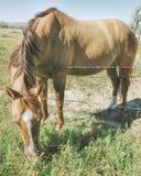 Лошадь на сельской местности Стоковые Фотографии RF