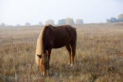 Лошадь на траве стоковые изображения