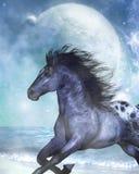 лошадь одичалая Бесплатная Иллюстрация