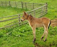 лошадь осленка колокола младенца Стоковые Изображения
