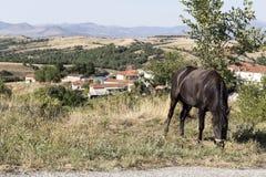 Лошадь пасет на дороге стоковые фото