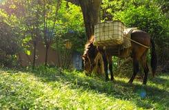 Лошадь пася в солнечном выгоне стоковое фото