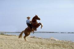 лошадь пляжа Стоковые Изображения