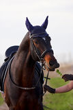 лошадь подавая травы Стоковая Фотография
