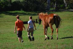 лошадь приятелей Стоковое Изображение