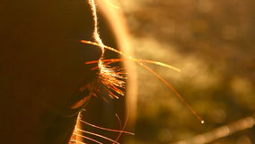 лошадь рассвета Стоковая Фотография