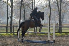 Лошадь скача над барьером стоковые изображения rf