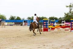 Лошадь скачет на состязание equitation стоковое фото rf