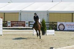 Лошадь скачет на состязание equitation стоковые фотографии rf