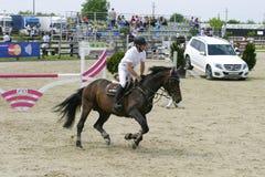 Лошадь скачет на состязание equitation стоковые изображения rf