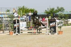 Лошадь скачет на состязание equitation стоковое изображение