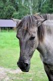 лошадь старая Стоковая Фотография RF