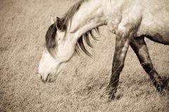 лошадь старая Стоковые Изображения RF