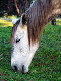 лошадь старая Стоковые Фото