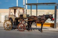 Лошадь стоя близко автобусная остановка в Мальте Валлетте горизонтально Путешествие или езда лошади вокруг стоковые фото