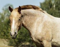 Лошадь стоя на зеленой траве стоковое изображение