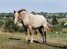 Лошадь стоя на зеленой траве стоковые фото