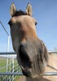 лошадь строба стоковое фото