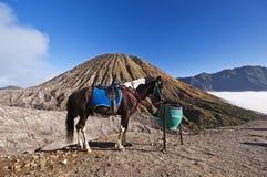 Лошадь с горой как фон Стоковые Изображения RF