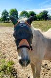 Лошадь с маской для защиты против насекомых стоковая фотография