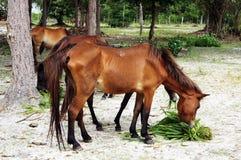 лошадь травы еды 2 Стоковые Фотографии RF
