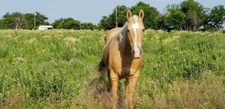 Лошадь улыбки стоковые фотографии rf