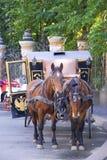лошадь управляемая экипажом Стоковые Фотографии RF