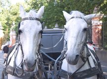 лошадь управляемая экипажом Стоковая Фотография
