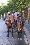 лошадь управляемая экипажом Стоковое Изображение RF