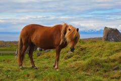 Лошадь фермера холеная Стоковое фото RF