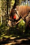Лошадь фольклора стоковые изображения rf