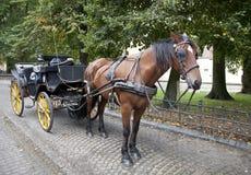 лошадь экипажа Бельгии brugge Стоковые Фотографии RF