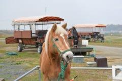 Лошадь экипажа, Киото, Япония Стоковое фото RF