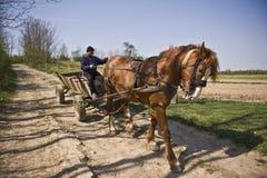 лошадь экипажа Стоковое Изображение RF