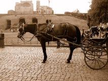 лошадь экипажа rome Стоковые Изображения
